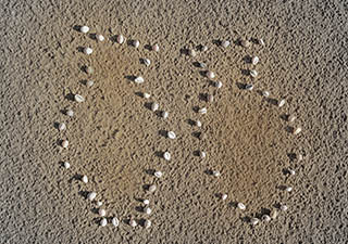 Trivia moneta vases on Llanddwyn Beach